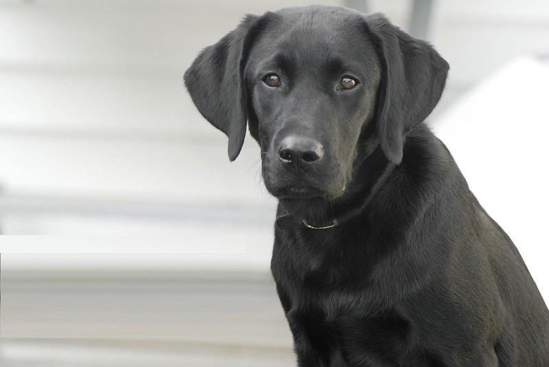 Afstand houden en een hond in dienst nemen